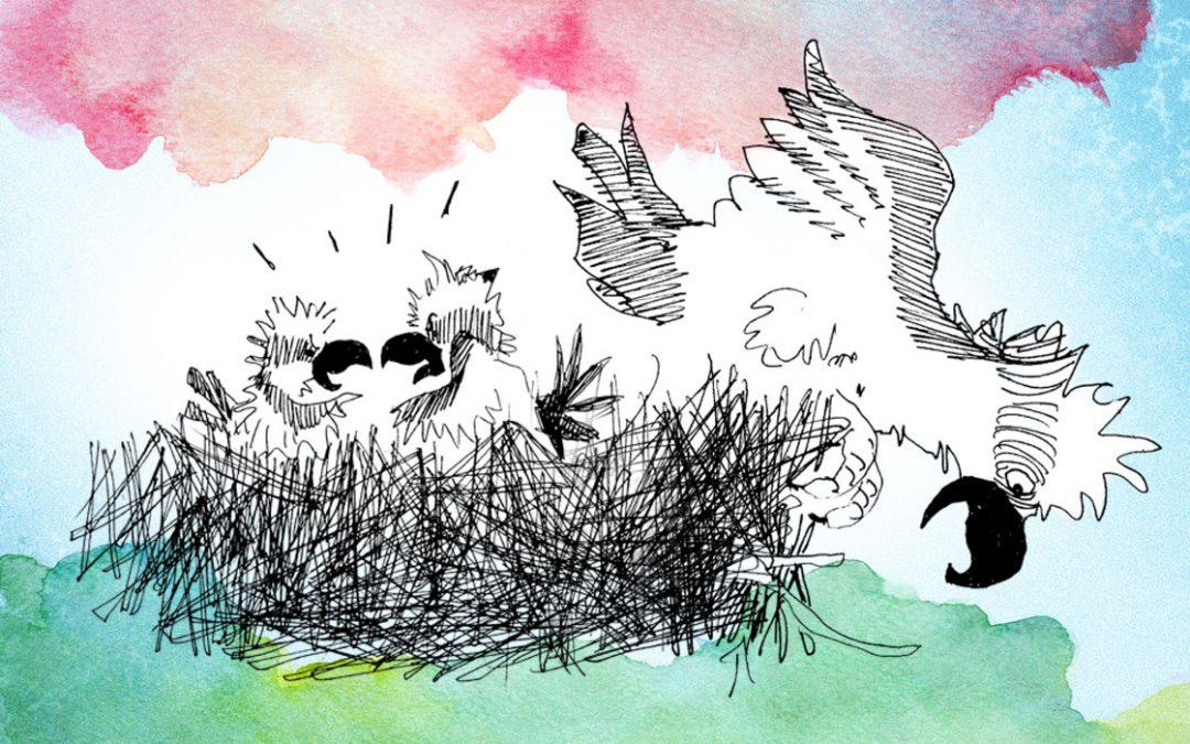 Finding Ospreys
